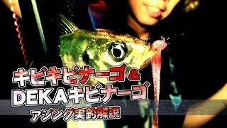 キビキビナーゴ-アジング実釣解説