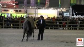 Flanders Horse Expo Gent 2013