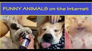 Những con vật dễ thương có thể chữa lành trái tim của mọi người.
