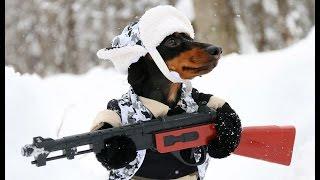 Huntin Dog Part 2 - WABBIT SEASON - Crusoe Dachshund