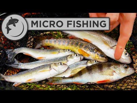 Mikrofiskeri i en lille å