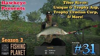 Fishing Planet | #31 - S3 | Tiber River: Unique & Trophy Asp, Trophy Crucian Carp, & MORE!