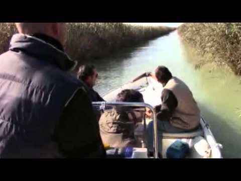 Additivi liquidi in esca per pesca