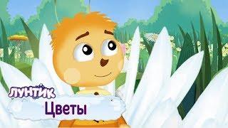 Цветы 🌸 Лунтик 🌺 Сборник мультфильмов 2019