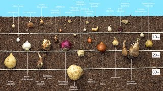 Planting Bulbs In Autumn