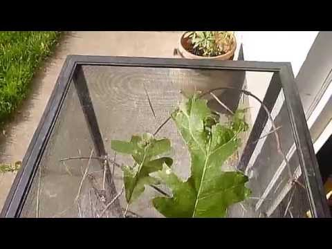 What to Feed Your Pet Stick Insects