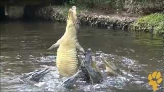 Рыбалка в кении станислава рейзин
