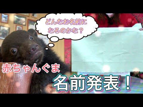 【2021年生まれ】ツキノワグマの赤ちゃん、お名前発表!