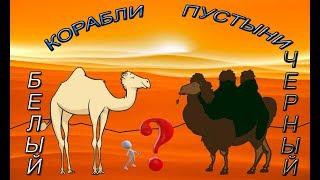 Бдо как поймать верблюда