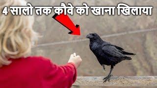 4 सालो तक कौवे को खाना खिलाया, फिर जो हुआ उसे देखकर चौक जाओगे Man has been feeding crow for 4 years