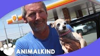 Three legged dog reunites with loving owners