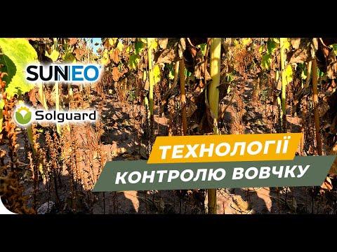 Защита от заразихи. Технология SanNeo и Solguard