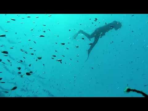 Arrecife de delfines – Eilat