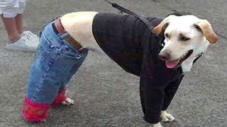 Dog Dresses Himself: Gutless Wonders Part 2