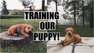 Training Our Puppy! // 9 Week Old Golden Retriever