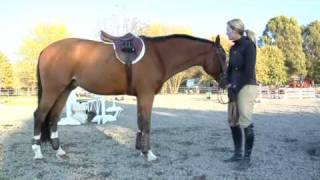 Proper Attire For Rider & Horse In The Equitation Ring