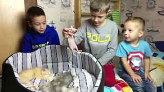 КОШКИ И КОТЫ Против Крысы Кошка и Котята Смешные Животные для Детей Funny Cats a