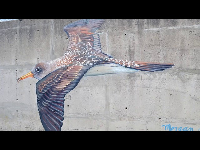 Nature is Home: Cory's Shearwater Mural
