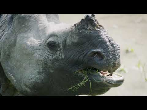 Kaziranga Sunderban Safari Adventure Tour Video