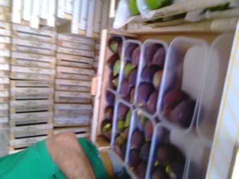 Il trattamento di unghia coltivato da aceto di sidro di mela