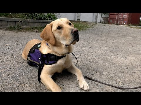 Meet Yzer, the OPSEU's BPS sector facility service dog