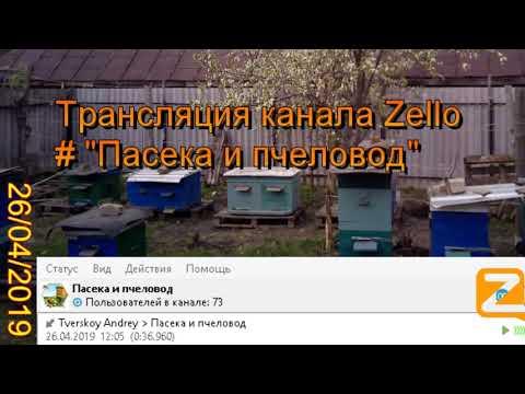 """Трансляция канала Zello """"Пасека и пчеловод"""". (Обзор за день) 26/04/2019"""