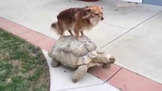 Смешное видео! Смешные приколы! Лучшие приколы! ТП! Смешные животные! Приколы! 256