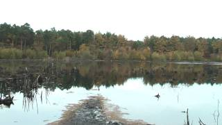 preview picture of video 'Delamere forest, Cheshire. An Autumn day.'