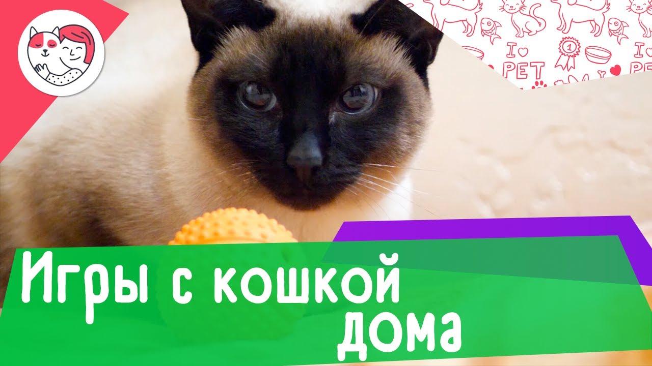 5 идей для игр с кошкой дома