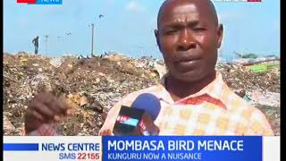 Mombasa County to use Kshs. 30 Million to fight birds that stealing tourists food | KTN News Centre