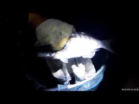 La pesca e riposo dal selvaggio in Karelia in macchina