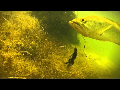 Catching a spawning bass( Sick underwater footage!)