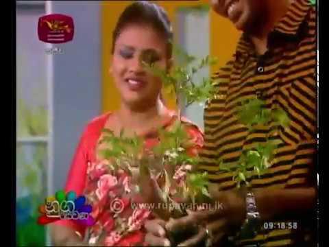 Nugasewana Bonsai Trees | 2019-01-22 | Rupavahini