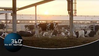 Die Hightech-Oase – Auf der größten Milchfarm der Welt