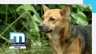 Dog Left High And Dry As Owner Flees From Flood| Mathrubhumi News