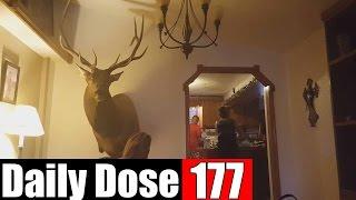 #DailyDose Ep.177 - MOOSE CONFUSION! | #G1GB