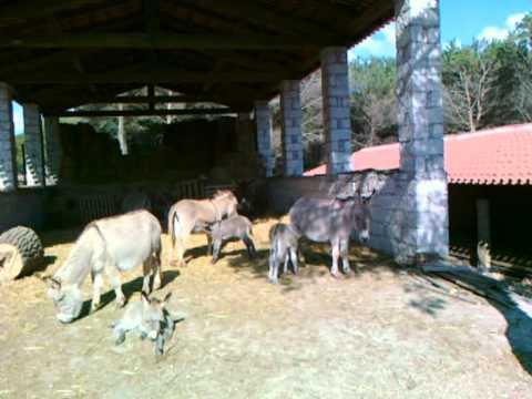 Eselspark Mui Muscas bei Ortueri