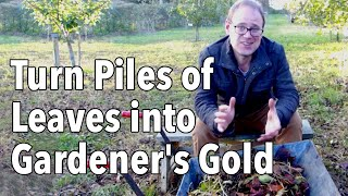 How To Make Leaf Mold: Turn Fallen Leaves Into Gardener's Gold