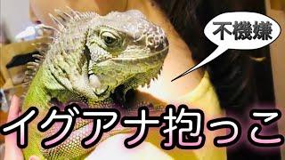 爬虫類カフェイグアナ抱っこしてきた。はちゅカフェ@吉祥寺