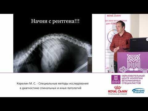 Карелин М. С. - Методы исследования в диагностике спинальных нарушений