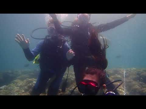 Reef encounters scuba diving (Okinawa)