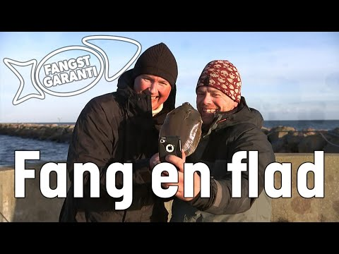 Fiskeri efter fladfisk på Grenaa Havn