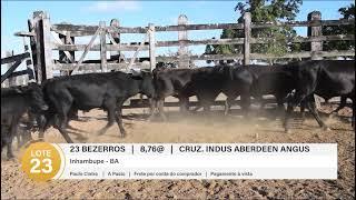 23 BEZERROS CRUZ. INDUSTRIAL
