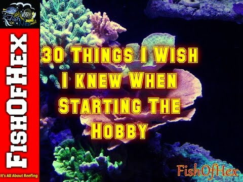 30 Things I Wish I Knew About The Saltwater Hobby When Starting Out