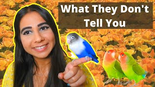 THE ULTIMATE LOVEBIRD CARE GUIDE 2020 | How to Take Care of a Lovebird