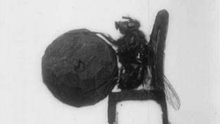 Дрессированная муха