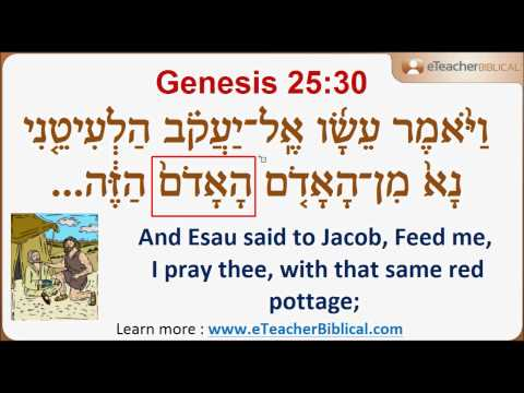 Questions Of The Week | Learn Biblical Hebrew & Greek with