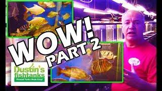 Best Aquarium Shop in Ohio Part 2  Gerber's Tropical Fish