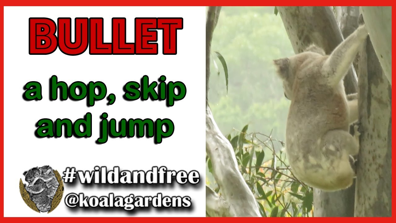 Bullet – a hop, skip and a jump