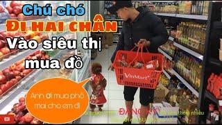 """Phản ứng của """"Chú Chó Đi Hai Chân"""" được đi SIÊU THỊ mua đồ ăn (dogs walk on two legs) Poodle vlog"""